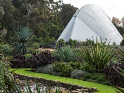 Adelaide-Botanic-Gardens_Bicentennial-Conservatory