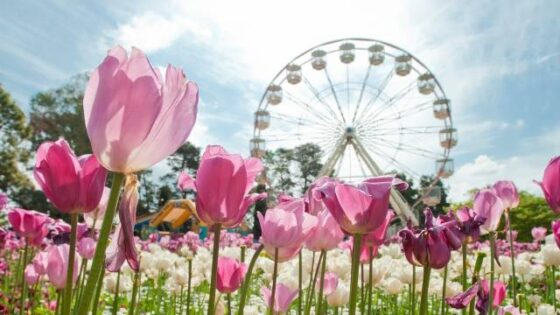 Canberra Floriade and Festival of Flowers Tour