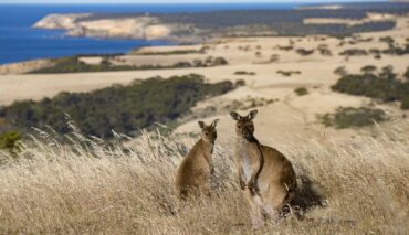 Kangaroo Island and Barossa Tour