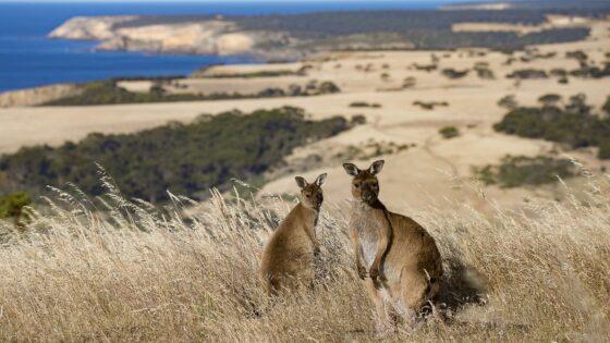Kangaroo Island and Barossa Tour
